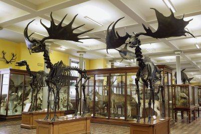 nmi-naturalhistory_interior